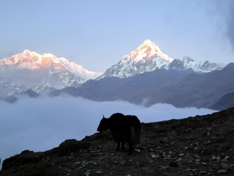 Annapurna South 2 (Nepal)