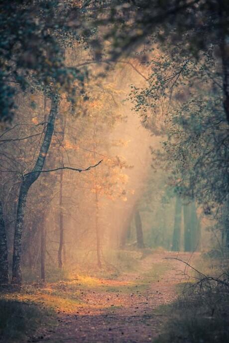 Magische woud