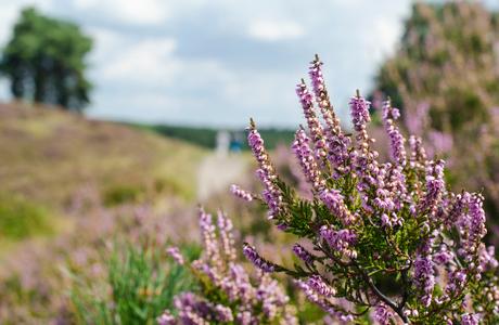 Op de Brunssumer Heide