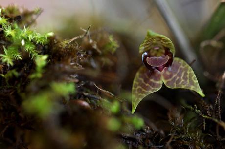 Orchidee 3mm