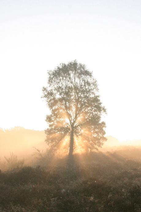 zon door de boom