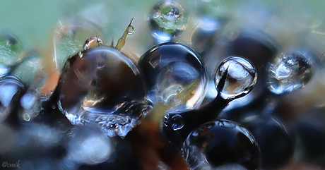 Dauwdruppels tussen stekeltjes larve