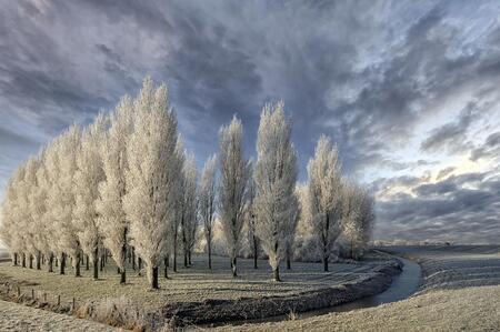 winterwonderland - winter in de polder - foto door Feline op 08-04-2021 - locatie: 3214 Zuidland, Nederland - deze foto bevat: winter, sneeuw, landschap, bomen, wolk, lucht, fabriek, natuurlijk landschap, hout, boom, kofferbak, lariks, bevriezing, gewoon