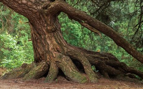 Een boom van Mantigerzand