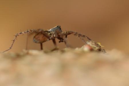 een wolf in schaapskleren - wolfspin - foto door AnneliesV op 16-04-2021 - deze foto bevat: geleedpotigen, oog, insect, plaag, terrestrische dieren, parasiet, mier, macrofotografie, timmerman mier, ongewervelden