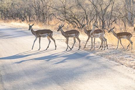Zonsopkomst in het Krugerpark