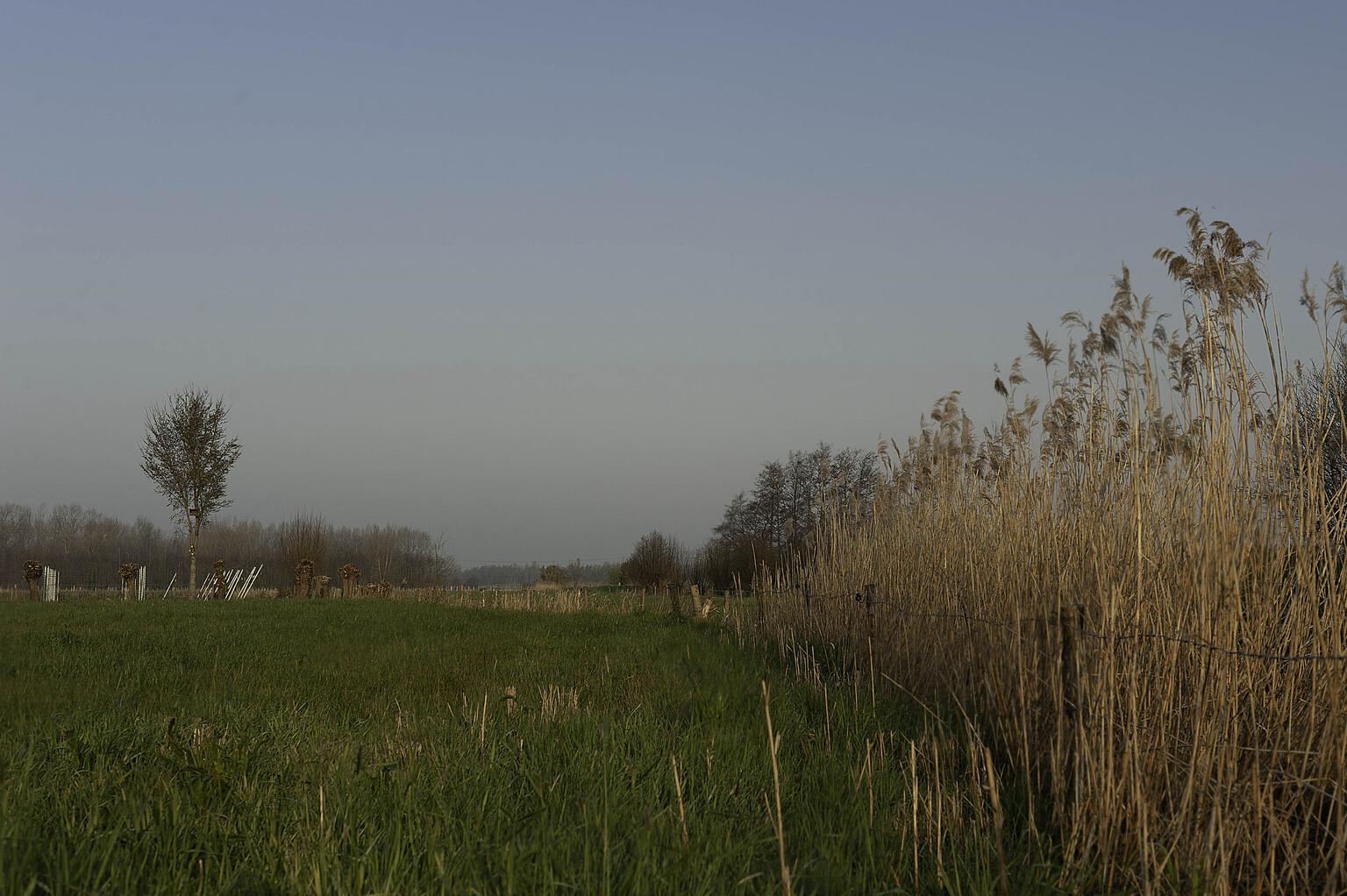 Photography - Natuur in Hamme België - foto door focuscabrio op 14-04-2021 - locatie: 9220 Hamme, België - deze foto bevat: lucht, fabriek, ecoregio, natuurlijk landschap, wolk, natuurlijke omgeving, vegetatie, gras, takje, boom