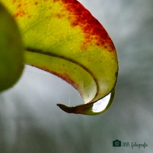 Druppel 💧 - Druppel kunnen vangen  na een hevige regenbui in het bos 💧 - foto door alda-b-b op 13-04-2021 - locatie: Almeloseweg 74, 7651 NH Tubbergen, Nederland - deze foto bevat: druppel, schultenwolde, regen, fabriek, vloeistof, bloemblaadje, terrestrische plant, water, boom, bloeiende plant, macrofotografie, natuurlijk landschap, bloem