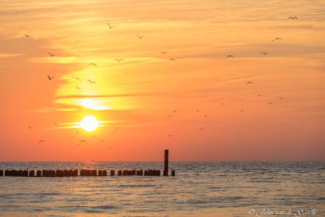 Meeuwen boven een golfbreker tijdens de zonsondergang in Domburg