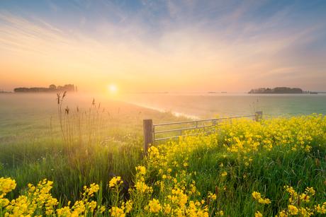 Een heerlijke zonsopkomst tussen het Koolzaad