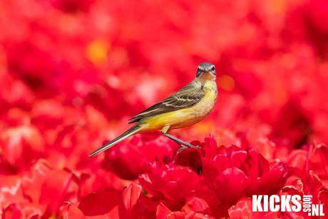 another little bird