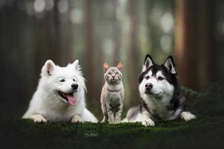 Ori, Boo & Odib