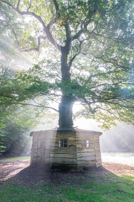 Secret Oak