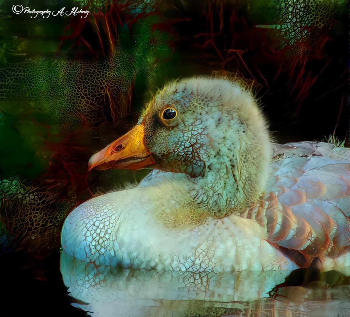 Gansje - Twee jaar terug gefotografeerd. Foto bewerkt. - foto door Anja Helmig op 16-04-2021 - deze foto bevat: vogel, water, groen, bek, organisme, eenden, ganzen en zwanen, watervogels, veer, aanpassing, schilderen
