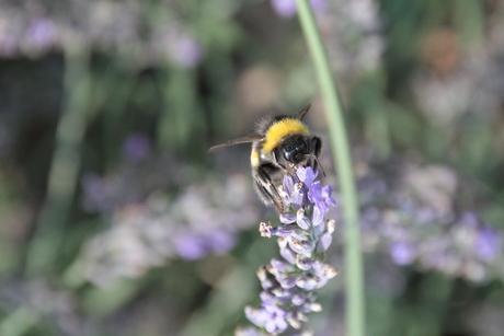 Lekkere nectar