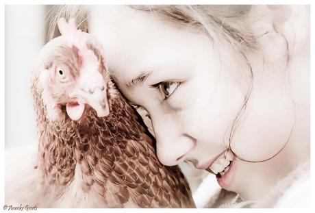 Kip 'zonder' kop