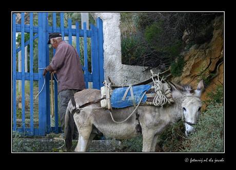 Griekse herder