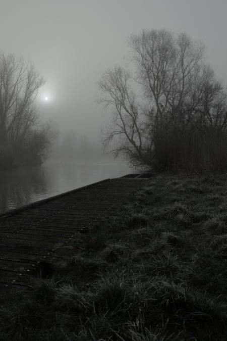 Misty sunrise - - - foto door alexvdp op 06-03-2021 - deze foto bevat: landschap, mist, bos, zonsopkomst, bomen