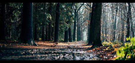 Lichtval - Bospad op een zonnige herfstdag.      ©MotionMan 2021 - foto door motionman op 03-01-2021 - deze foto bevat: kleuren, zon, boom, natuur, licht, herfst, bospad, lichtval, pad, bomen, nat, perspectief, zonlicht, sfeer, kleurrijk, modder, herfstkleuren, fotografie, val, scherptediepte, herfstbos, zonnig, sfeervol, bokeh, scene, oranjewoud, zeiss, modderig, planar, scenisch