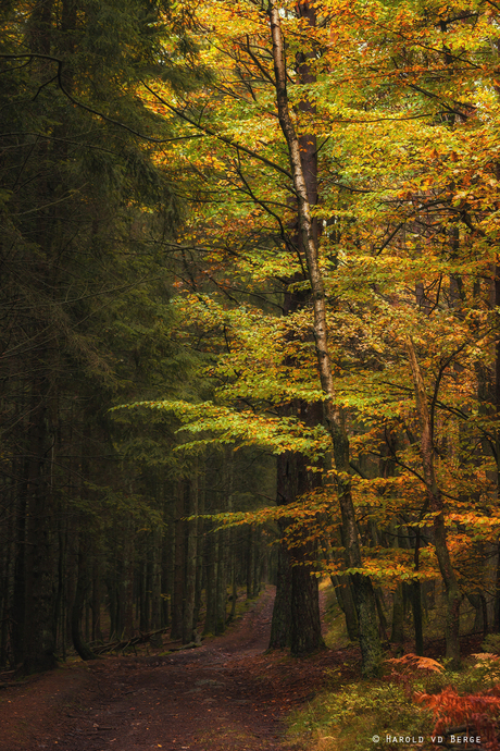 The Ardenne Forest