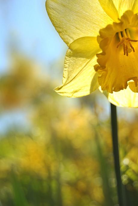 Licht van de Lente