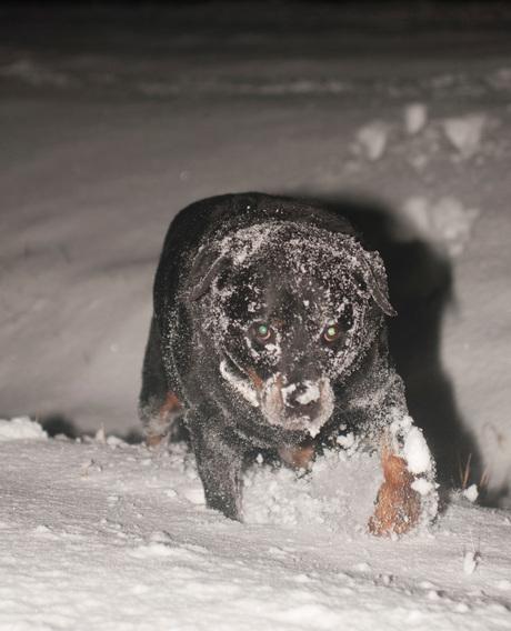 Erg koud die sneeuw !