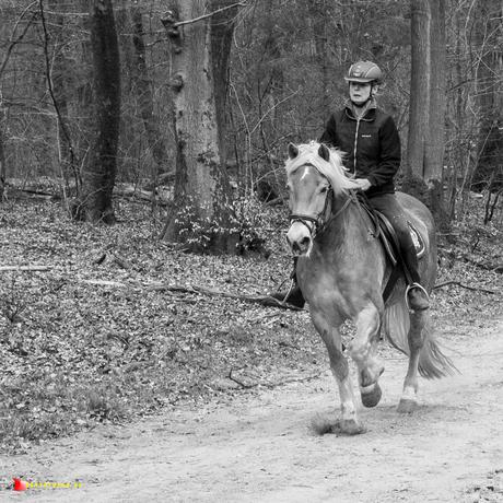 zandpad met paard
