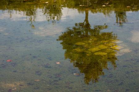 reflectie - In de tuinen van Versailles is veel te zien en soms krijg je een cadeautje. - foto door mady busch op 19-11-2011 - deze foto bevat: groen, blauw, boom, reflectie, weerspiegeling, mady