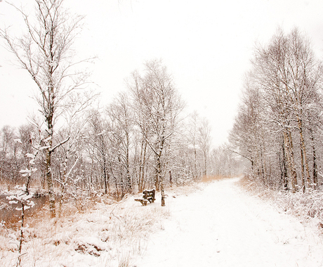 Let it snow I