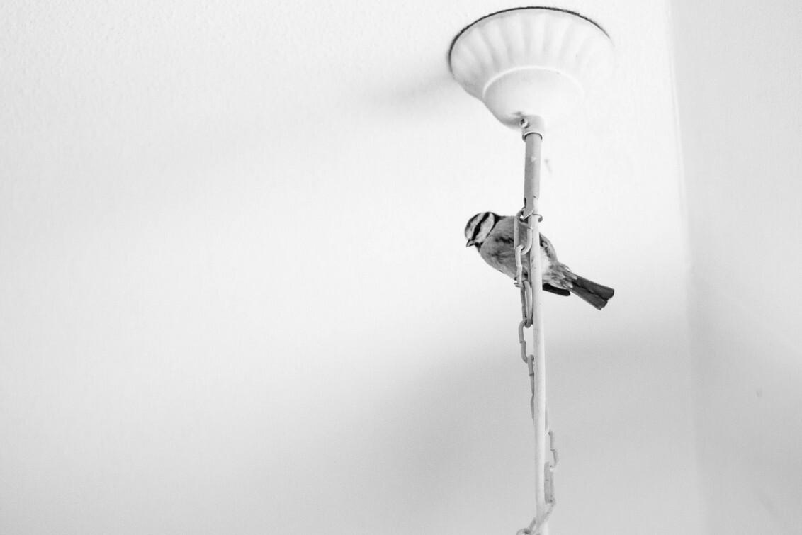 Arty Bird - Een heel ander soort dierenfoto, denk ik. Portret van een pimpelmees. - foto door VeraVeer op 01-06-2015 - deze foto bevat: vogels, dieren, vogel, pimpelmees, canon, vogeltje, lief, mooi, zwartwit