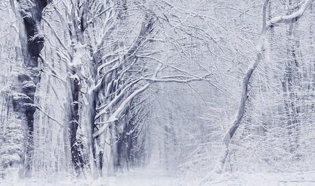Winterschoneochtend