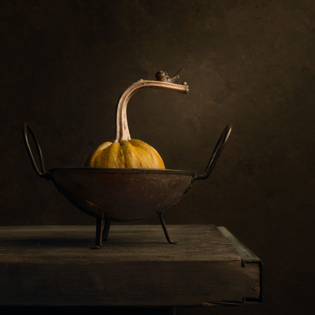 Pompoen met slakjes - Stilleven  twee slakjes op een pompoen. Houden jullie ook zo van deze warme kleuren? - foto door Carolovesmacro op 09-12-2020 - deze foto bevat: slak, dieren, stilleven, pompoen, sfeervol, Rembrandtlicht