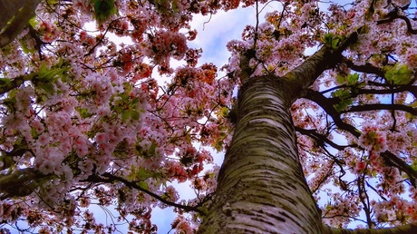 lenteboom kikkerperspectief
