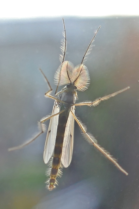 De mug is er weer
