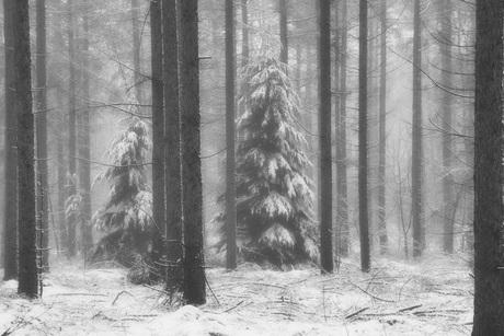 Oostereng-sneeuw 1.