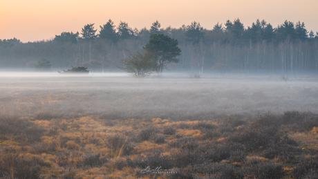 Mistige ochtend op de heide