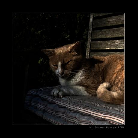 De kat III