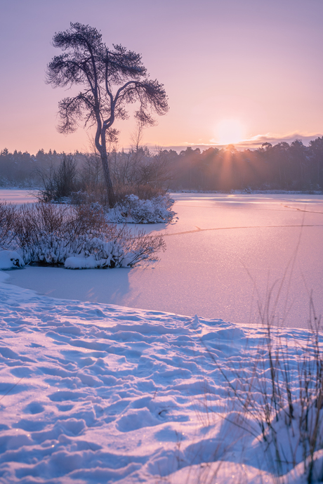 Sunrize in the snow