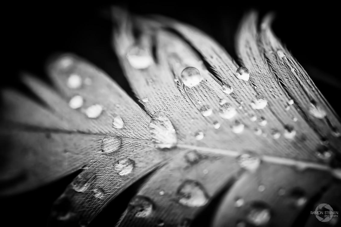 Drops on feather - Dauwdruppels op een eendenveer. - foto door eyefocus-76 op 09-04-2013 - deze foto bevat: macro, abstract, water, regen, structuur, druppels, dauw, veer, textuur, vogelveer