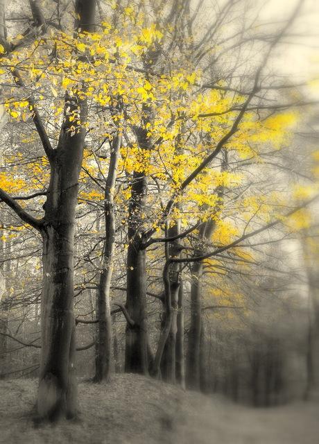 gele herfstwolk