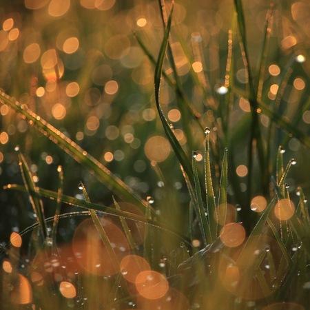Bokeh - Mooie bokeh in het gras - foto door Steinvoorn op 10-11-2015 - deze foto bevat: gras, groen, macro, water, druppel, druppels, zonsopkomst, nederland, bokeh