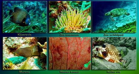 Curacao Onderwater