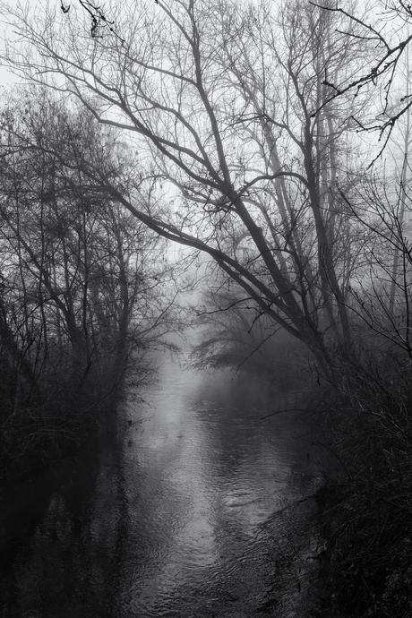 Verdwaald in de mist