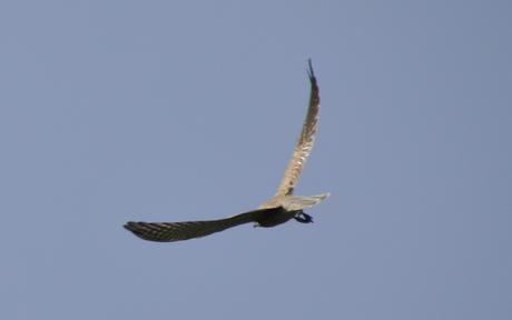 Vogel vlucht
