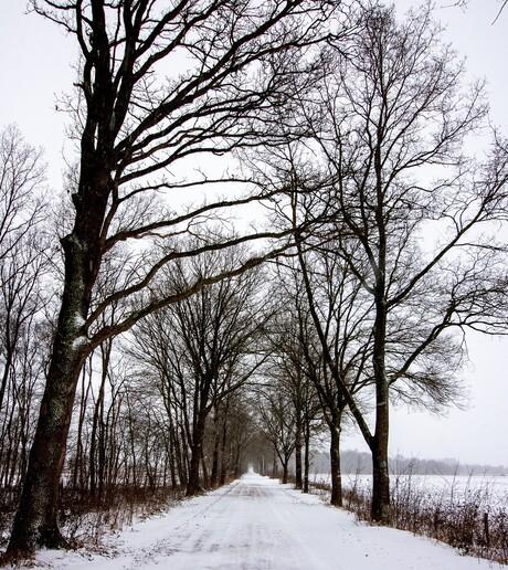 Bospad in de Winter