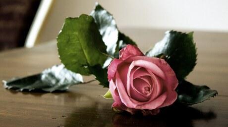 Valentijns roos