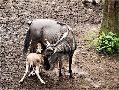 Moeder en kind 2.