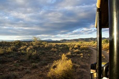 Safari sundown