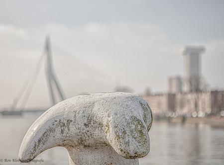 Rotsvast - Rotterdam - foto door kl0795 op 02-03-2021