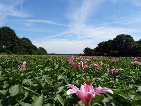 bloemenzee - - - foto door jabe-62 op 30-12-2016 - deze foto bevat: bloem